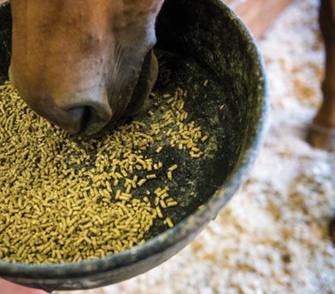 vai alla pagina dedicata agli integratori e agli alimenti per il benessere del cavallo