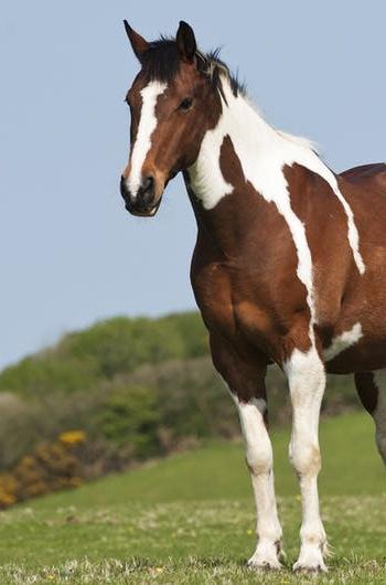 La storia di DB Horse Care